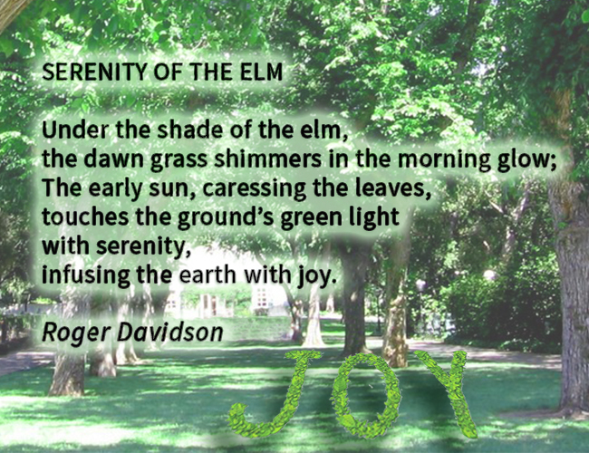 SERENITY-OF-THE-ELM-POEM.jpg?x83748